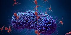 ما هو فيروس بكتريوفاج واخطاره