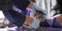 فيروس كوروناالأعراض التي تظهر على الحيوانات