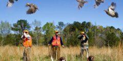 أفضل طريقة لصيد العصافير