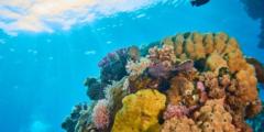 الشعاب المرجانية وأنواعها