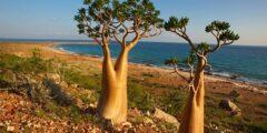 أرخبيل سقطرى أجمل بقاع اليمن السعيد