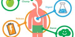 كيف يتم التمثيل الغذائي الحيوي