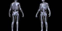 معلومات غريبة عن الهيكل العظمي ..  تعرفها لأول مرة