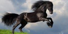 أجمل أشكال أحصنة ملونة في العالم