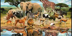 حوار حول أجمل مخلوقات الله