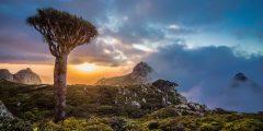 جزيرة سقطرى اليمنية: لؤلؤة على شاطئ المحيط الهندي
