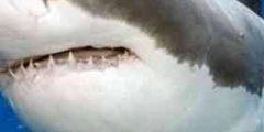 حقائق عن القرش…تعرف على 6 أنواع من القروش والأماكن التى تتواجد بها وكيف تلد صغارها.
