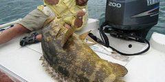 كيفية صيد سمك الهامور