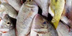 كيف يتم صيد سمك الشعور