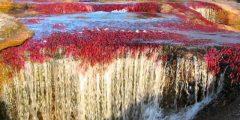 معلومات عن نهر الكريستال .. نهر الألوان الخمسة ..