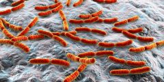 كيف تم أكتشاف البكتيريا