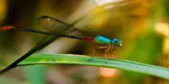 تعرف على أغرب حقائق عالم الحشرات وطرق تكاثرها وفوائدها