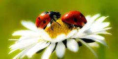 مقالة مفيدة عن الحشرات النافعة مثل النحل