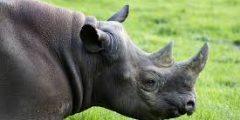 من هو وحيد القرن..تعبير عن وحيد القرن