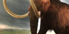 فيل الماموث , بعض الحقائق عن فيل الماموث