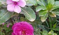 مقالة هامةحول النبات الطبيعية المختلفة
