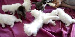 معلومات تهمك عن طعام القطط حديثة الولادة..تعرف على طعام القطط حديثة الولادة