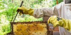 نبذة عن طريقة تربية النحل في العراق