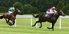 ملخص عن رياضة سباق الأحصنة