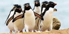 معلومات وحقائق عن طائر البطريق..نبذة مفسرة عن طائر البطريق