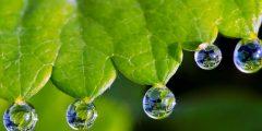 ما هو الادماع عند النباتات
