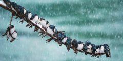 طريقة تدفئة العصافير في الشتاء .. وماذا تفعل لو أصيبت بالبرد