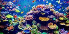 ما الفرق بين الشعاب المرجانية والنبات البحري