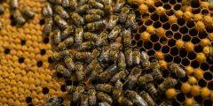 معلومات عن بناء خلية النحل