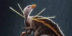 نبذة عن الديناصور الدجاجة يثير اهتمام العلماء