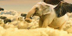 معلومات عن طائر الفيل… أبرز المعلومات عن طائر الفيل المنقرض