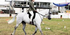 معلومات عن تاريخ ركوب الخيول