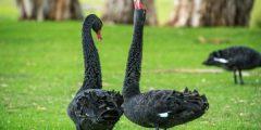 معلومات عن أشهر حيوانات أستراليا