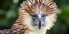 10 من اكبر الطيور الجارحة بالصور