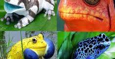 10 من أنواع الضفادع الغريبة بالصور