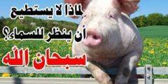 لماذا الخنزير لا ينظر للسماء