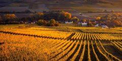 نبذة عن عادات وتقاليد الريف.. بحث عن الريف