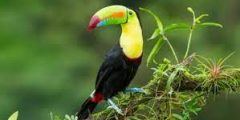 7 من أغلى الطيور في العالم بالصور