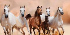 احسن حصان في العالم .. 6 من أفضل السلالات في العالم