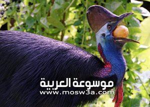 أكبر طائر في العالم وأهم الطيور الغير قادرة على الطيران
