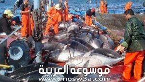 نبذة عن الصيد البحري ..ماهى اهمية طرق الصيد البحري