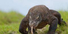 هل تعلم عن الزواحف .. الزواحف ذوات الدم البارد