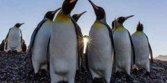 حقائق عن البطريق .. ومعلومات عن حياته وطبيعته