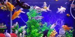طريقة تربية السمك… دليلك للتعرف على الطرق الصحيحة لتربية السمك
