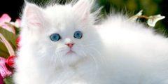تربية القطط في المنزل واضرارها