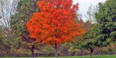 بحث عن تاريخ اليوم العالمي للشجرة
