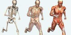 مم يتكون الجهاز الهيكلي؟ وما هي وظائفه للجسم؟ ونصائح للحفاظ على صحته