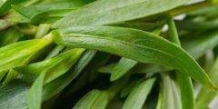 ما هو نبات الطرخون ..تعرف معنا على نبات الطرخون