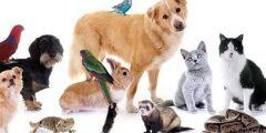 أرشادات عامة صحية لمربي الحيوانات الأليفة