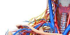 طرق المحافظة على الجهاز العصبي لحسم الانسان